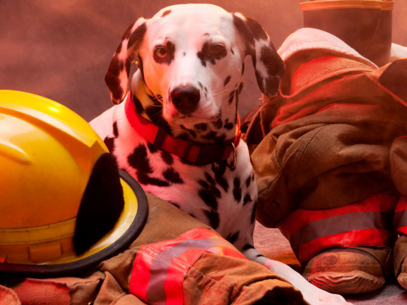 Disaster Preparedness: Do It Like the Fire Department
